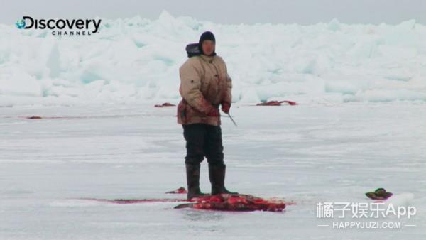 只活12天就被猎杀,海豹的一生比你我想像还要仓促!