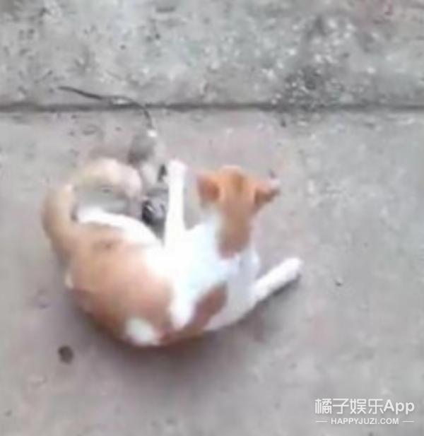 男子竟然把死老鼠栓在猫尾巴上,结果猫咪的反应,令人心疼…