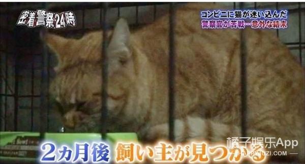 """""""警察24小时""""现场跟踪便利店取暖猫咪被捕事件,它下场竟然是..."""