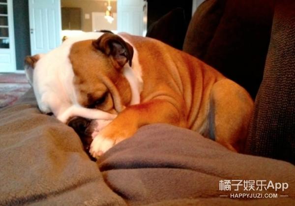 一家人去度假怕狗狗孤单,于是老爸想了个巨牛X的办法