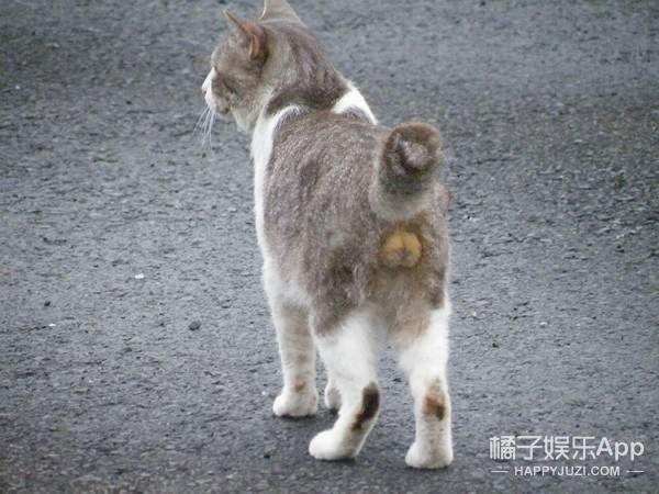 日本第一本喵玉写真集,不要一直盯着人家的蛋蛋啦!流氓!