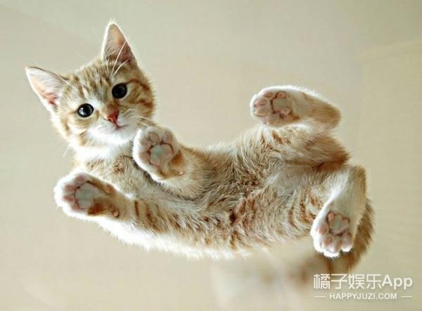 猫咪去爪手术,比你想象中要残忍100倍!剁你手指试试看