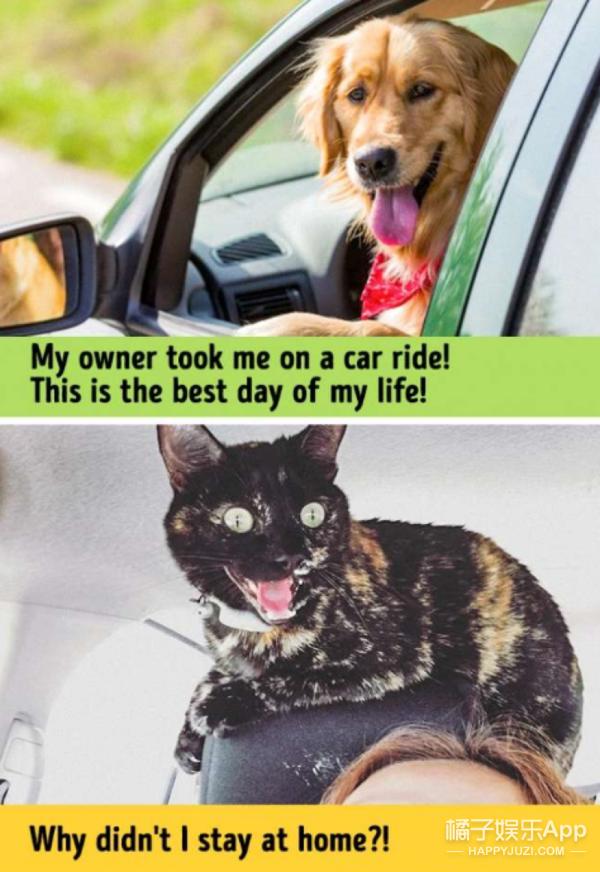 13张图片证明喵咪和狗狗来自不同的星球!