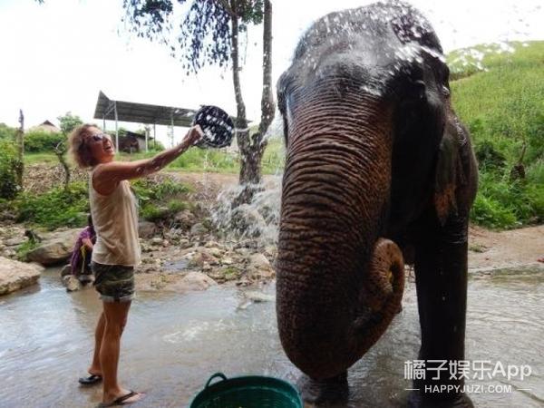 75岁大象忧郁便秘,饲养员掏出陈年绿色便便!恶心又暖心