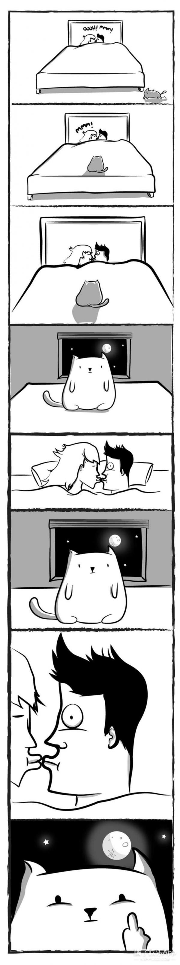 养猫的日常,整晚都会被它压着踩来踩去已经习惯了