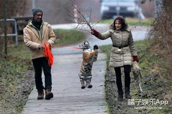 活成一只宠物狗的小老虎!到底是该为它感到庆幸还是心酸?