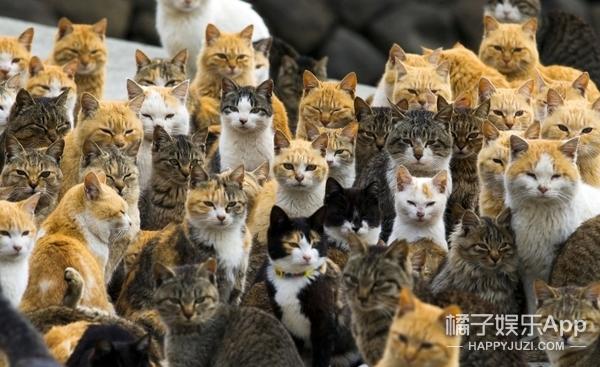 """2000多万只野猫攻陷澳洲,官方居然提出了""""肯德基诱捕计划"""""""