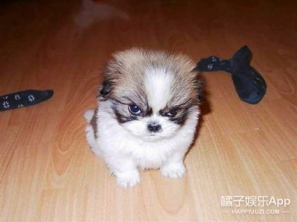 看了这些小动物的生气照,你可能再也不想养宠物了
