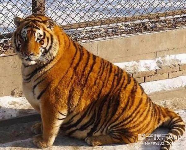 每逢佳节胖三斤,过完春节你长胖了几斤?