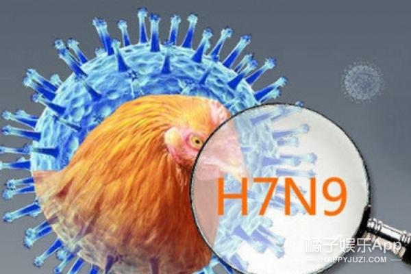 鸡在禽流感之前,曾经做过丘比特、神兽、太阳……