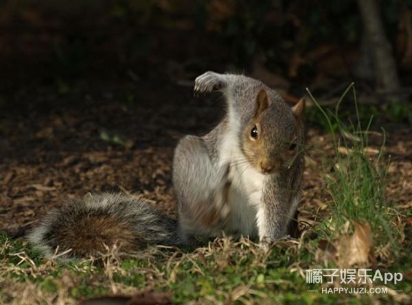 这只帅气落地小松鼠被PS了,无敌可i之外战力也破万了