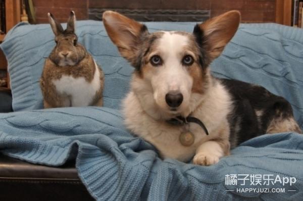 寄几不知道发生了什么?狗狗爱上大鲤鱼、柯基却变成了兔子