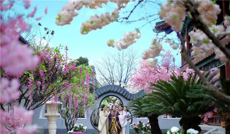 《花谢花飞花满天》唯美场景照令人赏心悦目