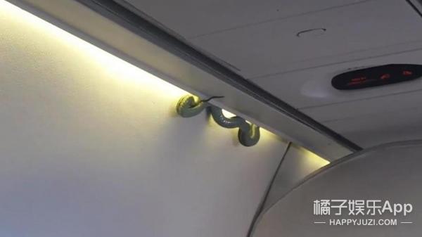 厉害了空姐!美国航班上演徒手抓蛇