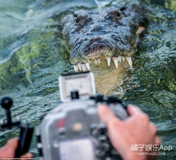 这些与鳄鱼亲密接触的人说:他们一点都不害怕