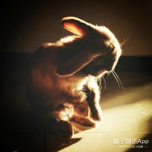 萌兔来袭——我叫歪歪,初次见面请多关照~