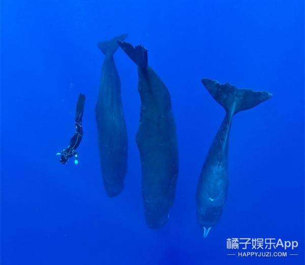 抹香鲸是怎么睡觉的?这姿势也是有点呆萌啊