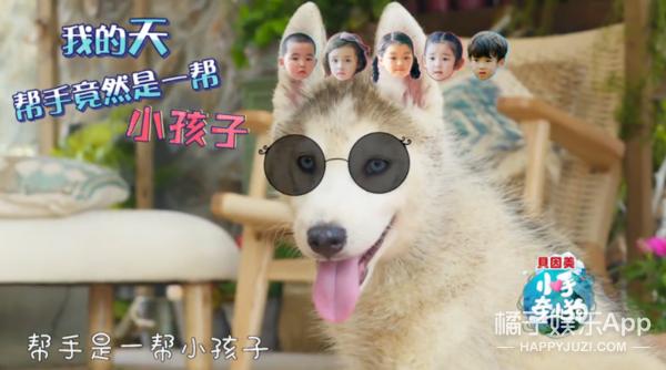 五个萌娃五只萌犬的组合,罗志祥要被这档综艺玩儿坏了...