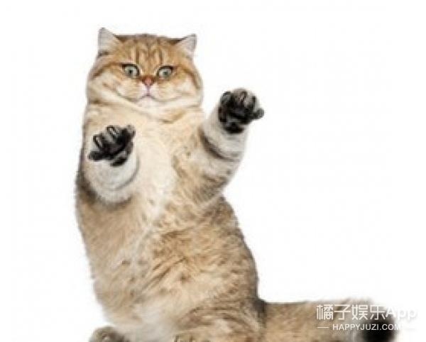 遇到一只喜欢站着的猫,也就只能接受事实了
