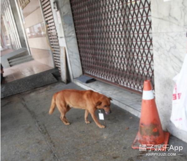 台版忠犬小八,医院门口徘徊6天不肯离开,脖子上吊牌让人落泪!