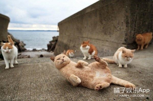 一个不允许养狗的小岛,数百只猫横行霸道简直是猫奴们的天堂!