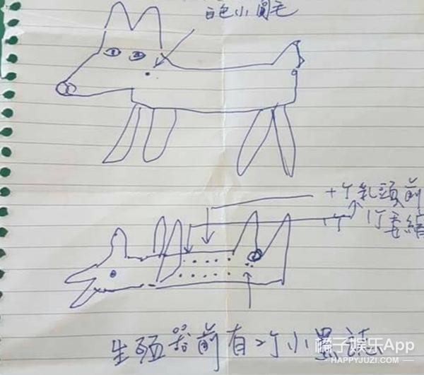 你逗我,警察通过失主神级手绘图找回丢失狗狗