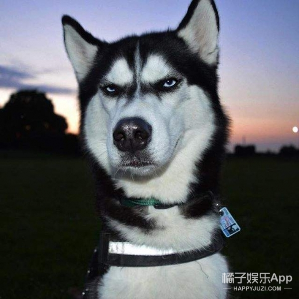 狗狗大明星年入十几万,对主人臭脸,但也超有治愈力
