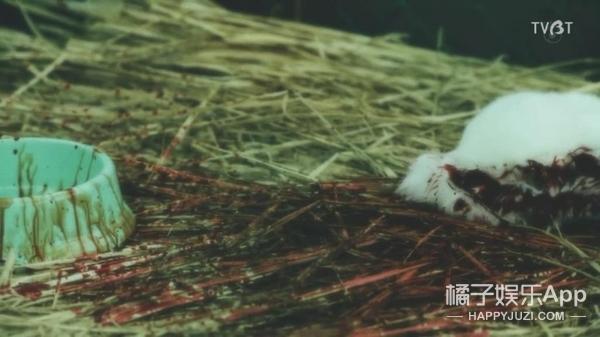 《世界奇妙物语》2017秋季特别篇,日本人也中了freestyle的毒?