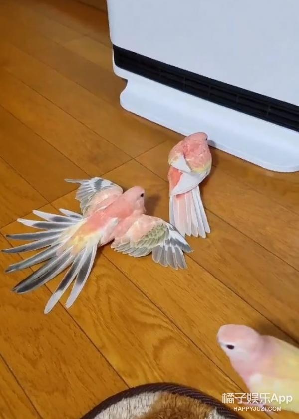 乖巧鹦鹉排队吹暖气,论取暖器的正确使用方法