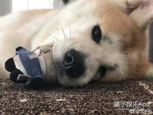 """李宇春登台前鞋被狗咬烂,无奈穿""""破洞鞋""""领奖"""