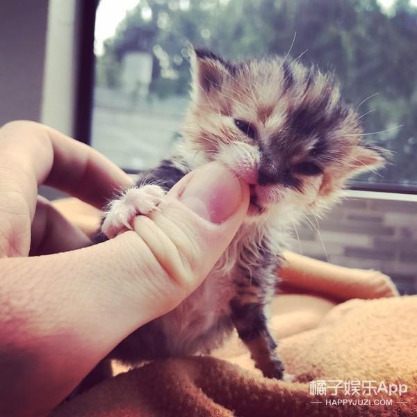 这只巴掌大的流浪奶猫,遇退役兵哥哥被宠成小公主