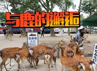 一座鹿与人和谐相处的城市,这才是真正的人与自然吧!