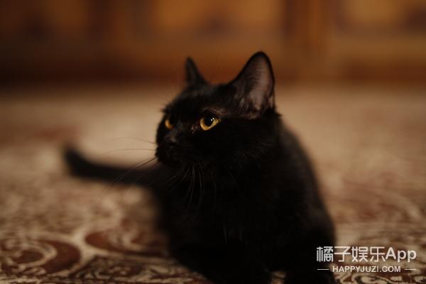 为什么影视剧都偏爱黑猫?陈凯歌的《妖猫传》说出了答案!