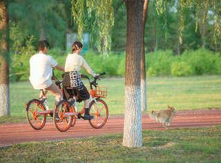 《女兒2》陳喬恩帶愛寵約會男嘉賓 兩人林蔭路浪漫騎單車