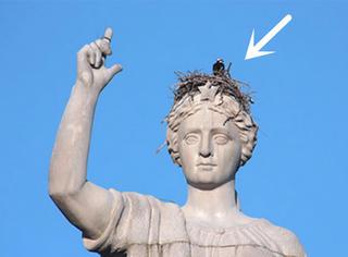 这些鸟竟然霸占了这些地方搭窝,简直太任性!