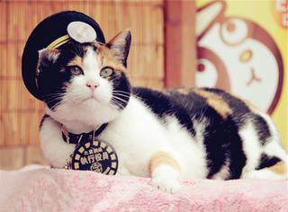 世上最尽职的猫站长走了 留下了它的车站和它的车