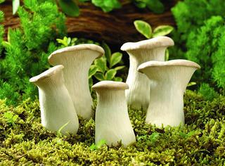 想找蘑菇吃吗 剪开你家的墙上壁纸可能就会有哦