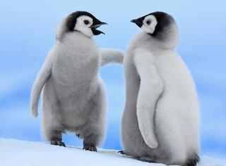 萌宠 | 笑尿,你知道在南极当一只企鹅有多难吗!