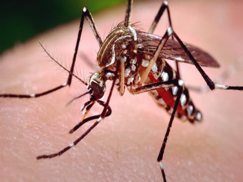 一张图告诉你,蚊子是怎么吸血的!