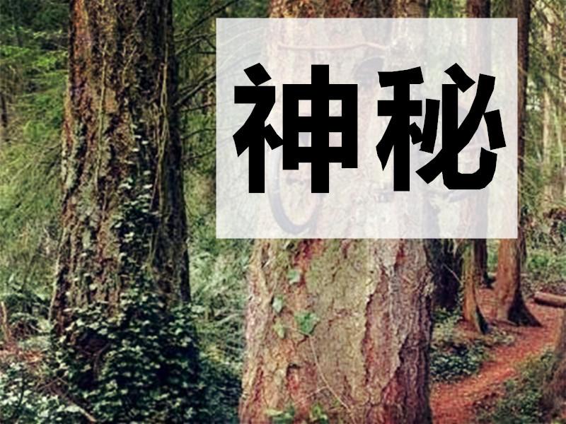 别怪我没说,停车千万别停树下,否则后果自负...