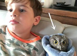 小男孩在家看猫头鹰动画,结果一只猫头鹰闻讯赶来赖着不走了