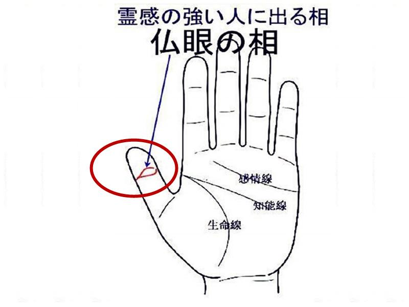 据说大拇指上有佛眼的,都能看见鬼...