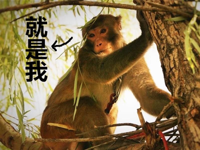 为了70周年阅兵,我们派了猴子去抓鸟!