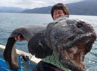 日本海域捕获大海怪,面目狰狞不忍直视!