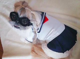 狗姑娘都这么美了,你还不打扮一下自己吗?