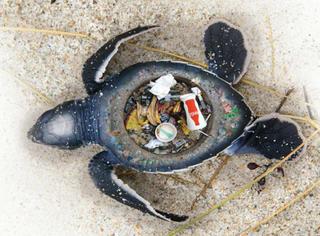 """触目惊心!看到这些""""海洋生物"""",你还敢乱扔垃圾么?"""