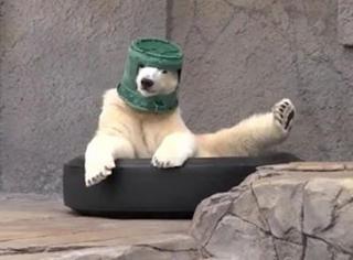 """这桶是它的""""真爱"""",走哪带哪,熊的世界不是你能懂的…"""