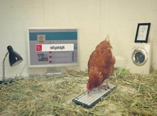 真假?这家公司微博的博主竟然是一只鸡!