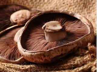 原来蘑菇不仅能吃,还能做电池!