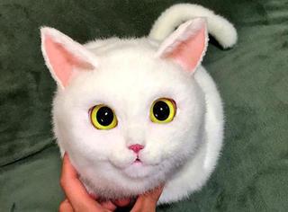 日本爱猫狂魔设计出超逼真喵星人包包,萌你一脸血!